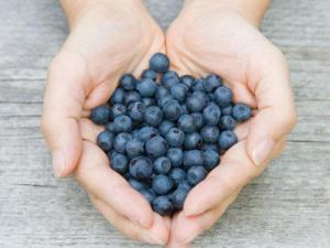 blueberries lose weight fight fat weight loss health
