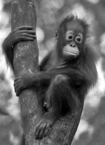 Pledge your name and help the Orangutans beaty skincare